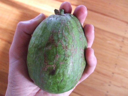 Fergus the Feijoa