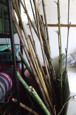 Bamboo stash.