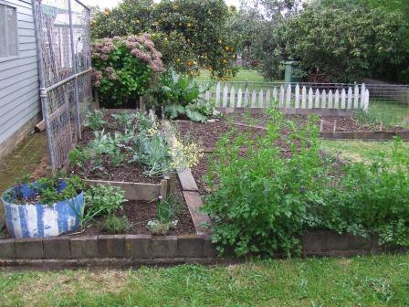 Vege garden October