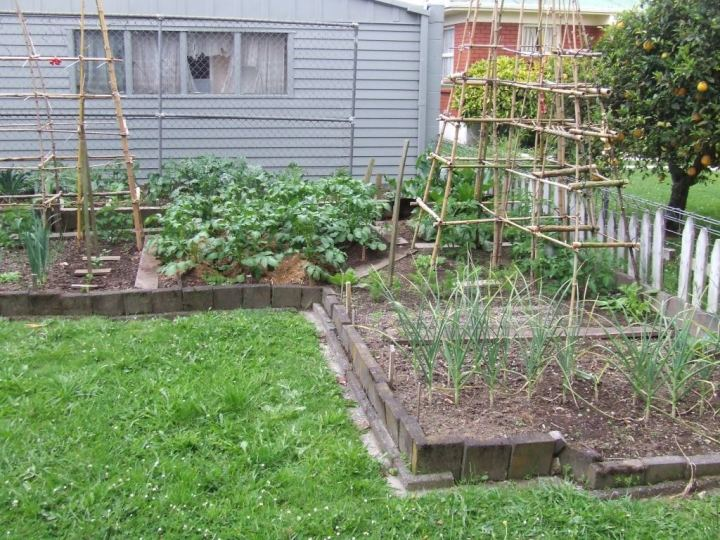Vege garden 4