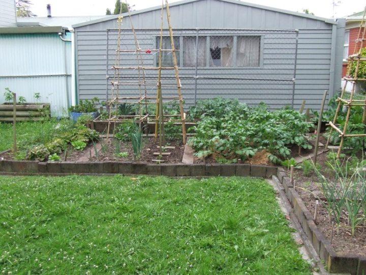 Vege garden 3