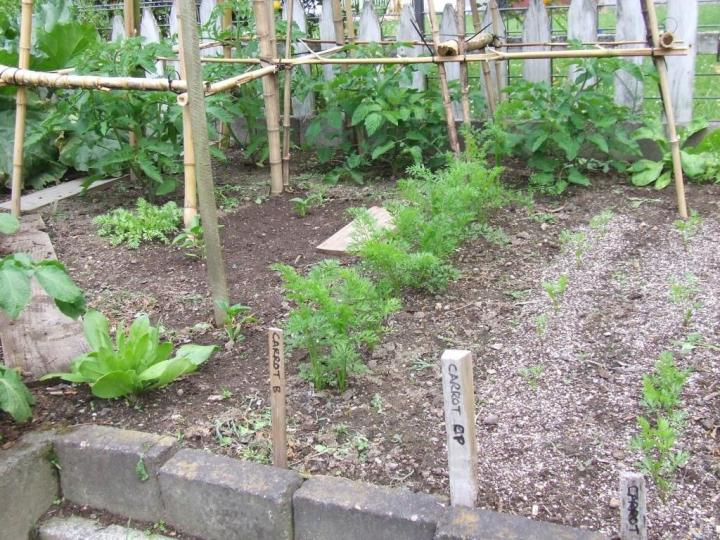 Tomatoes, capsicums, carrots