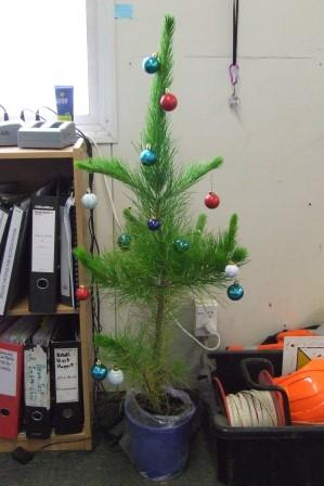 The self-grown Christmas tree that I'm very attached to. Not quite big enough for home, I took it to the office for some Christmas spirit.