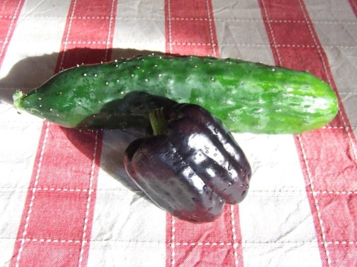 Capsicum and cucumber