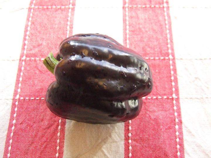 'Purple Beauty' capsicum