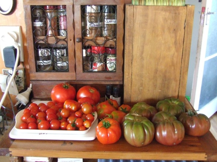 Tomatoes on bench