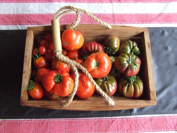 tomatoes in trug