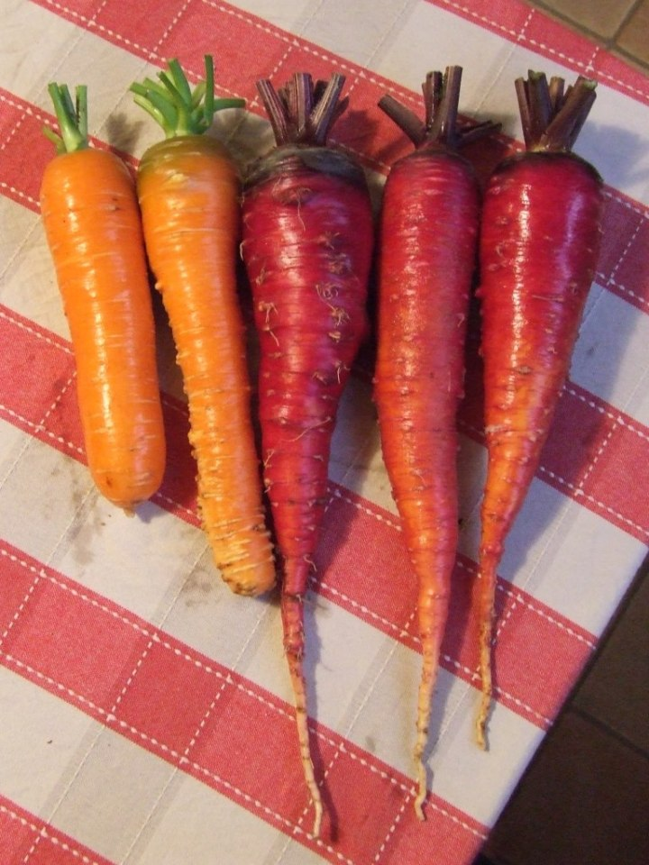Carrots 'Bastille' & 'Cosmic Purple'