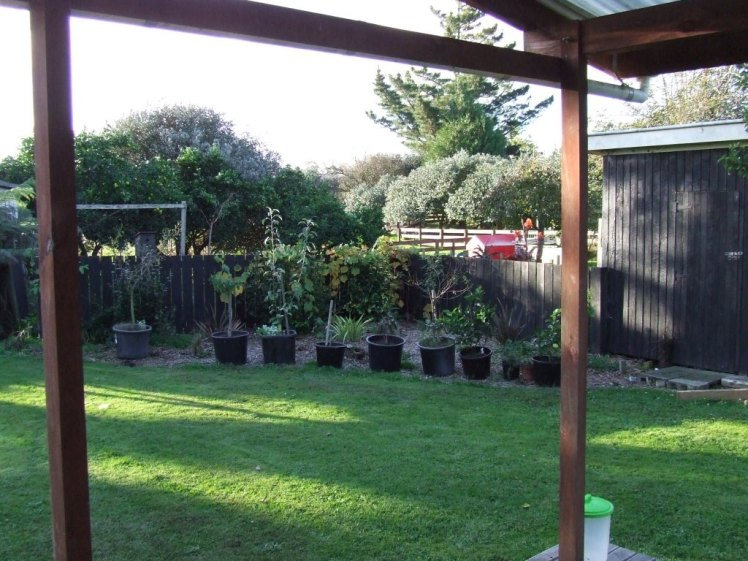 Herb/fruit tree garden