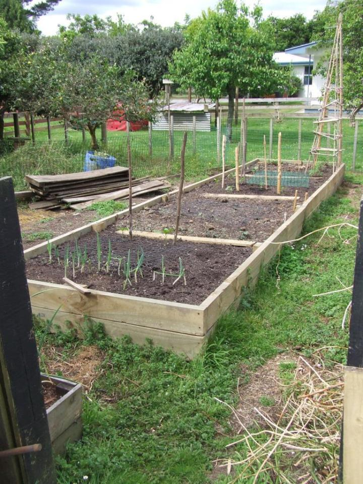 Raised vege bed