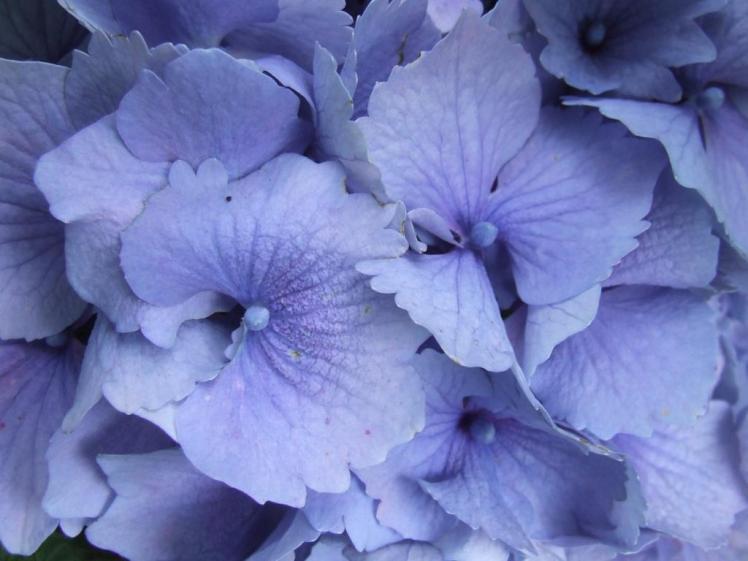 Big blue close-up