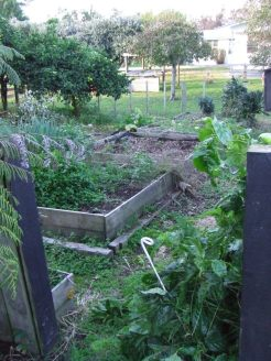 The Vege Garden then. Old raised beds with weedmat and random stuff lying around. And lots and lots of weeds.
