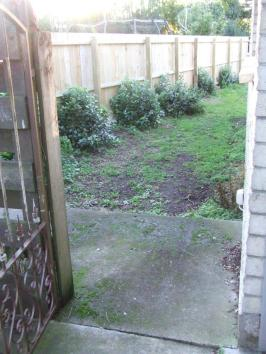 West side garden then. Resprouting feijoa stumps and weedy ground.