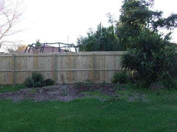 The Maple Garden before, containing a loquat tree, re-sprouting feijoa stumps and weeds.