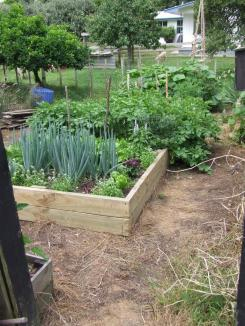 A new, solid, 8m long raised bed was planned by me and built by The Husband.