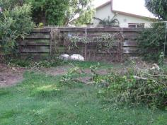 Part-way through clearing the climbers and ivy. The camellia in the left corner has been chainsawed down by The Husband. It's not that I hate camellias, they are just EVERYWHERE and they are hard to get rid of.