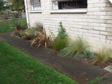 The east side path garden today. Native grasses, ground covers and shrubs are filling up the space nicely.