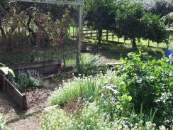 Now: Tomatoes need pulling out. One end of raised vege bed #2 that needs to be built. Feather children are keeping the weeds down in the orchard.