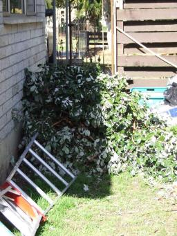 Oh look, another pruning mountain.