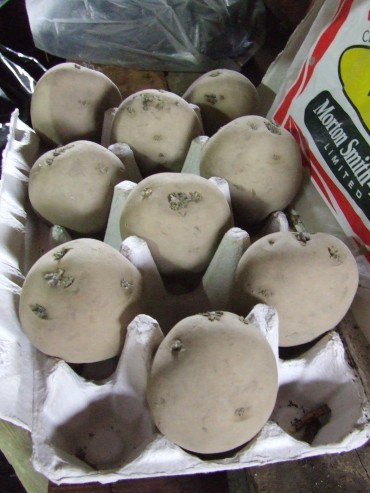 'Rocket' potatoes.