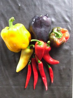 'Colour Salad Selection' can throw up any of these capsicums, except the long red chillies at the bottom. Maybe.