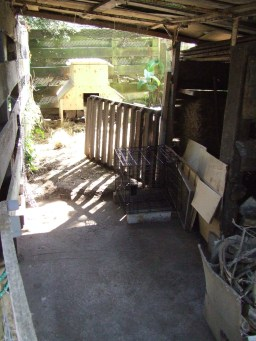 The space in front of the woodshed hasn't been this clean for a while. Or ever. It won't last long though...