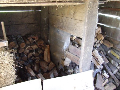 Imagine, a two-bay woodshed containing actual, stacked firewood!