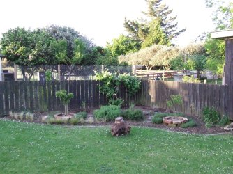 The Herb Garden is beginning to look more like a herb garden. Note, the hungus camellia stump.