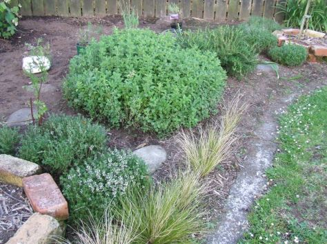 I have started shaping the herbs into balls. Then The Little Fulla comes along and steps on or falls on my balls.