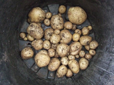 Rocket potatoes.