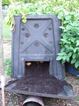How's this for a good potato bin? It has harvesting doors! So this is what you do with those plastic compost bins you don't want...