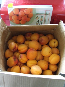 Apricots in the post: cheaper, better and less effort to acquire than those from the supermarket.