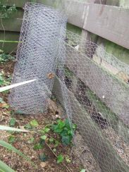This is the lower level of chicken-wiring. There will be another level to cover the top part of the fence.