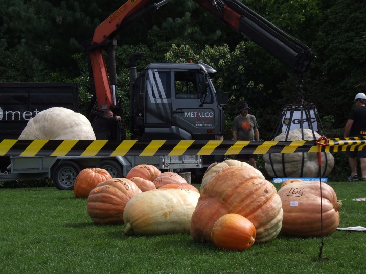 There were more GIANT PUMPKINS in the children and school categories.