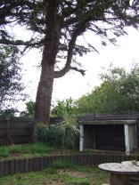Doesn't the cedar tree look a whole heap better than it did before?