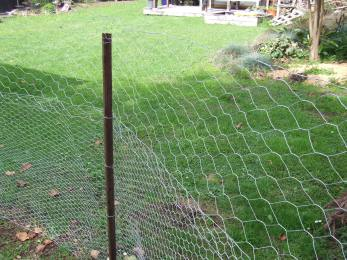 I did one layer of 900mm-high, 25mm hole diameter netting topped with a layer of 50mm diameter netting cut in half. It was cheaper to use netting with a bigger hole at the top and chicks aren't going to escape up there. I didn't want the fence too high though, hence I cut the roll in half.