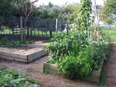 The vege garden is in the process of cleaning up and getting readied for next season.