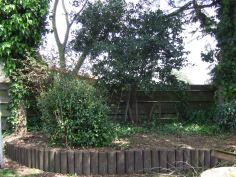 I discovered that the bay tree along the fence wasn't just one tree...