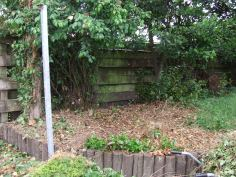 Camellia stumps are everywhere, as well as re-sprouting bay tree (right) and unruly quince shrub (left). There was a lot of awkward cutting, hacking and digging to clear the way for wire netting to be stapled along the wooden fence.