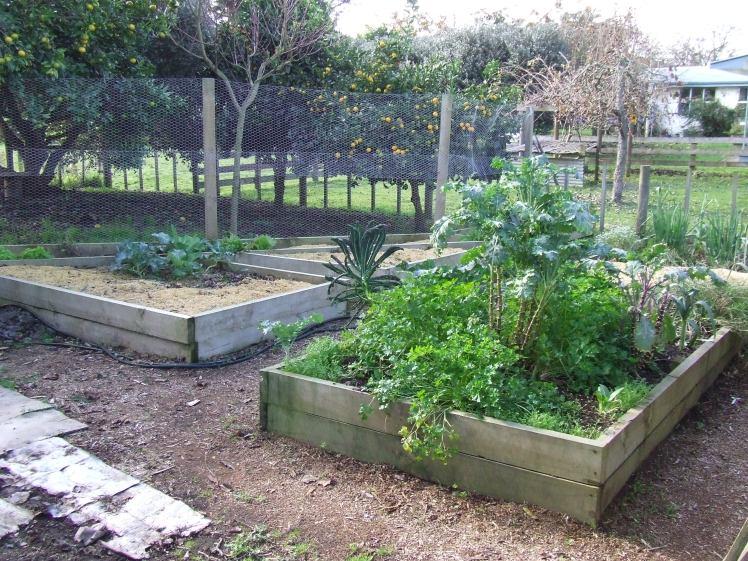 Vege garden 2