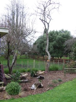 The doomed plum tree on the right finally disappeared.