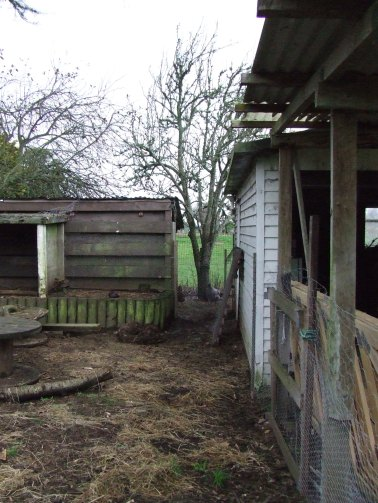 Now we can look at the pear tree and paddock beyond instead of an ugly, plywood pallet.