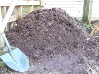 Under the freshest weeds, most of the weedpost pile looked like this: beautiful dark brown stuff, full of worms, but not quite decomposed enough for use on the garden.