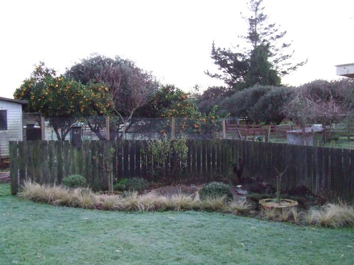 Frosty morning herb garden