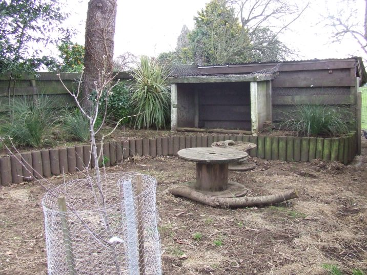 The Cedar Pen is starting to look a bit nicer as the plants come in. The 'All in One' almond in the foreground is budding up now.
