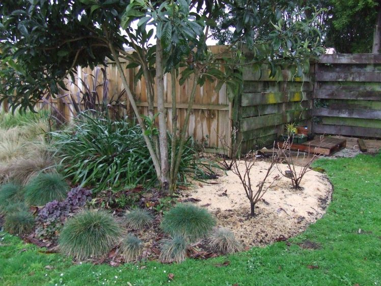 Blackcurrants in The Maple Garden