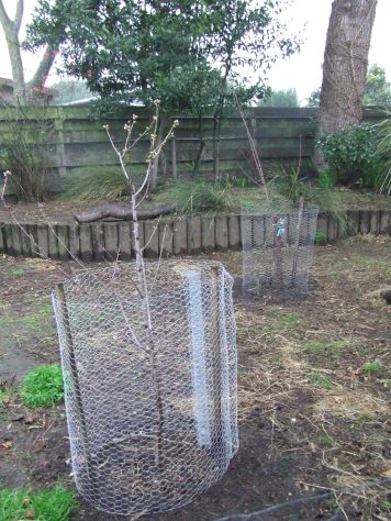 The Cedar Pen now contains an almond tree (front) and an apricot tree (back). They both need pruning but I'll wait until things get warmer and drier.