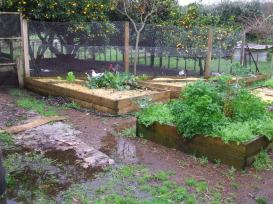 Can you notice one of the benefits to planting in raised beds?