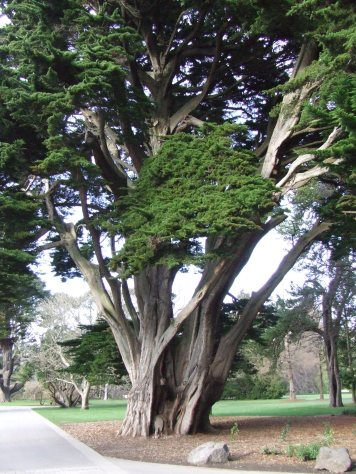 There are so many beautiful old trees in the gardens, which come to the fore in winter.