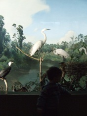 I always like the Bird Hall in the museum. The taxidermy birds are set amid beautiful paintings and natural features.